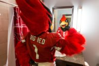 Big Red is the mascot of the NFL franchise, the Arizona Cardinals